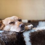 chien panier dormir