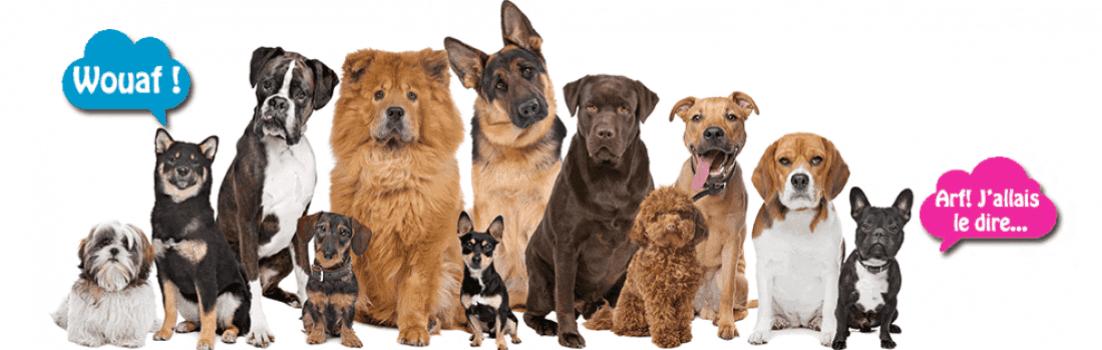 assurance pour chien comparateur gratuit. Black Bedroom Furniture Sets. Home Design Ideas