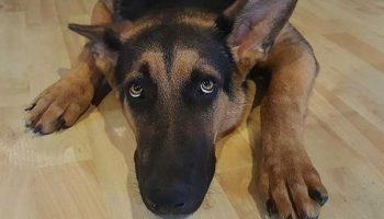 rassurer un chien qui a peur