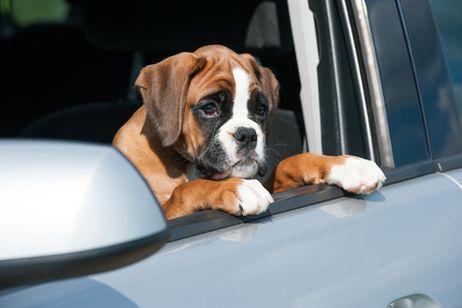 soigner l 39 incontinence du chien par l 39 homeopathie tout ce qu 39 il faut savoir sur chiens. Black Bedroom Furniture Sets. Home Design Ideas
