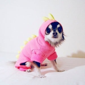 deguisement chien
