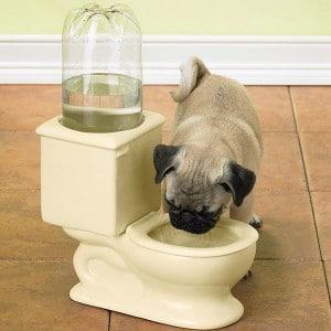 toilette-chien