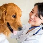 entretien-chien-santé