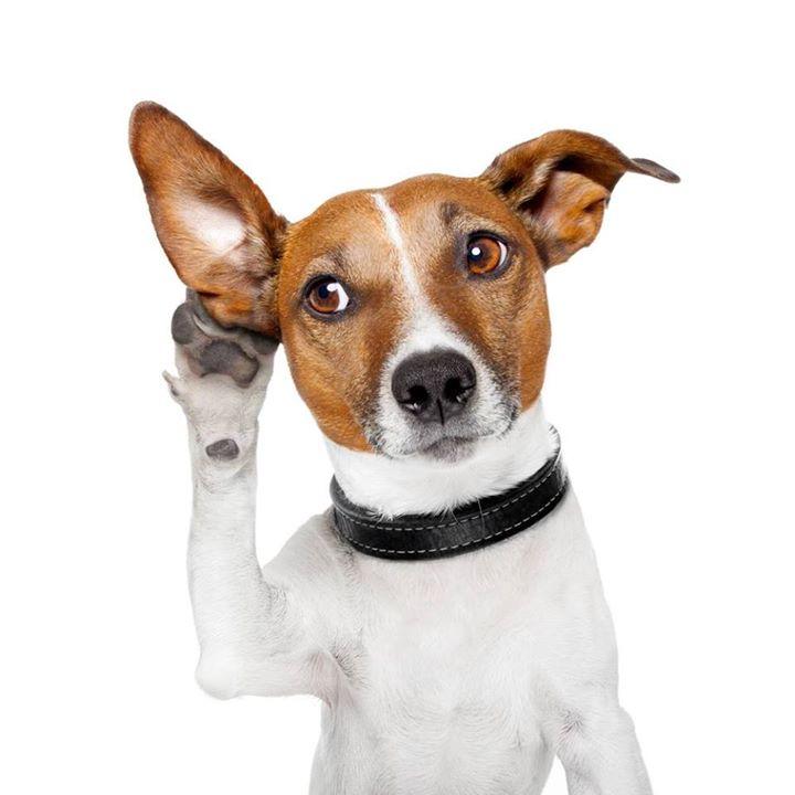 le langage corporel du chien tout ce qu 39 il faut savoir sur les chiens. Black Bedroom Furniture Sets. Home Design Ideas