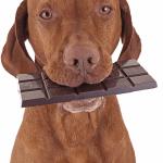 chien-chocolat