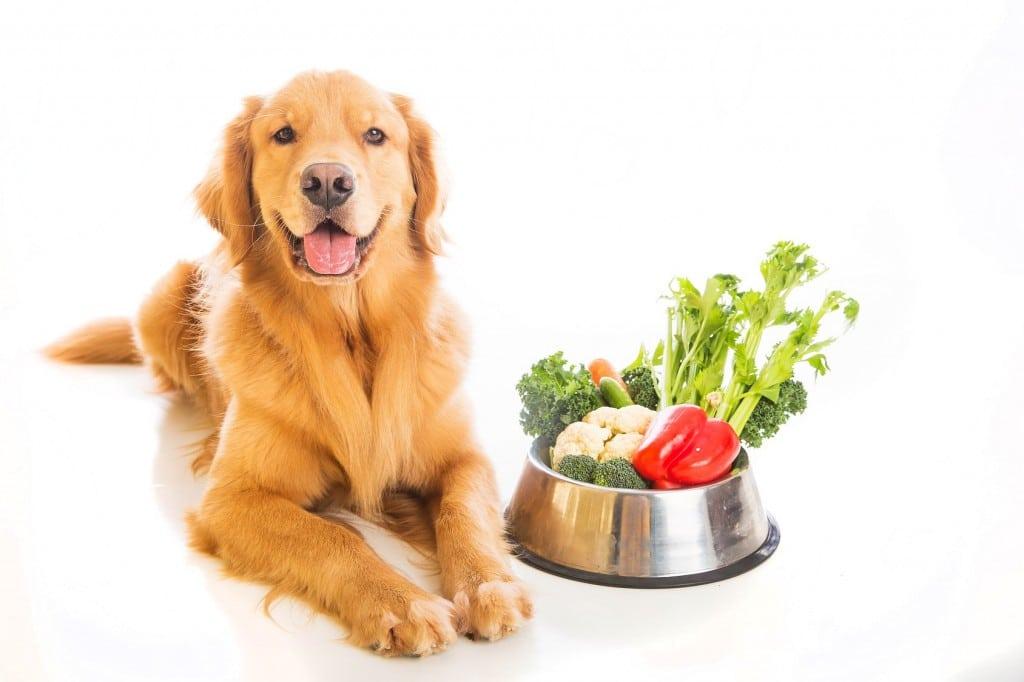 Dog Natural Food Diet