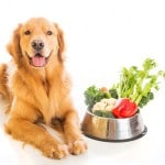 chien régime