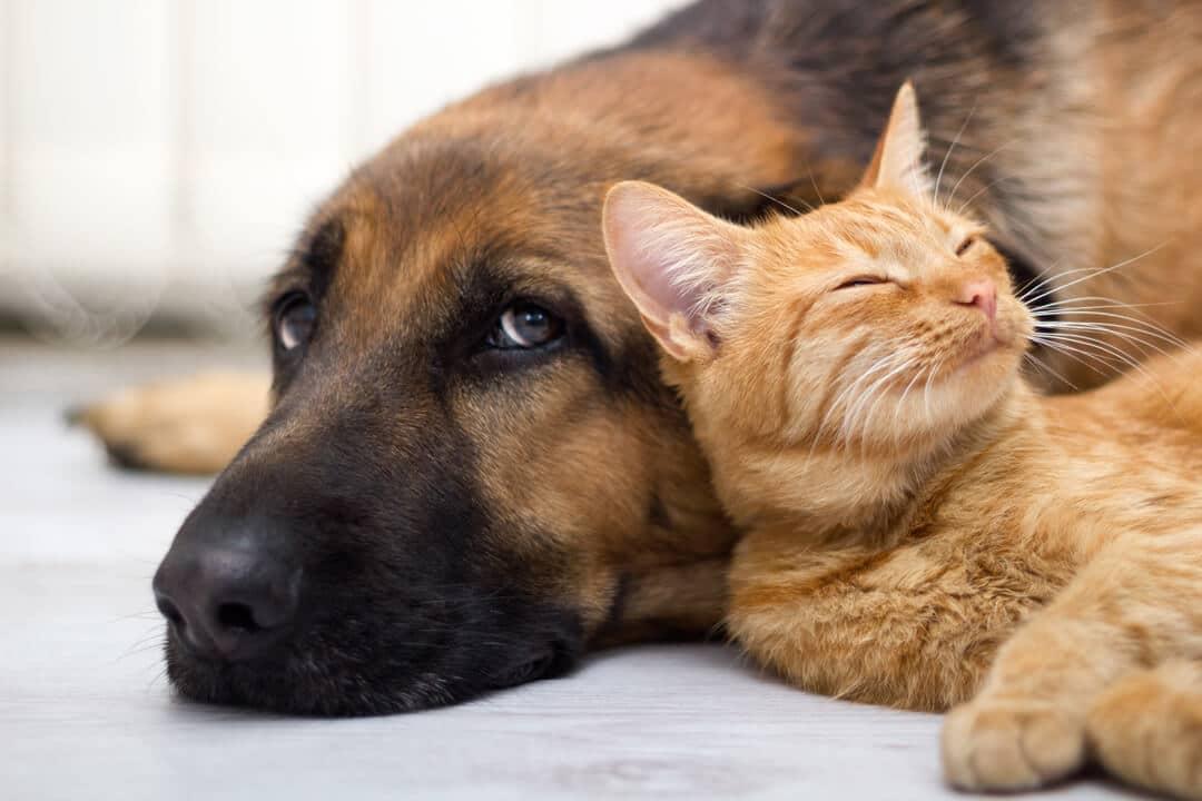 cohabitation entre chien et chat comment faire. Black Bedroom Furniture Sets. Home Design Ideas