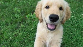 apprendre à son chien à ne pas sauter