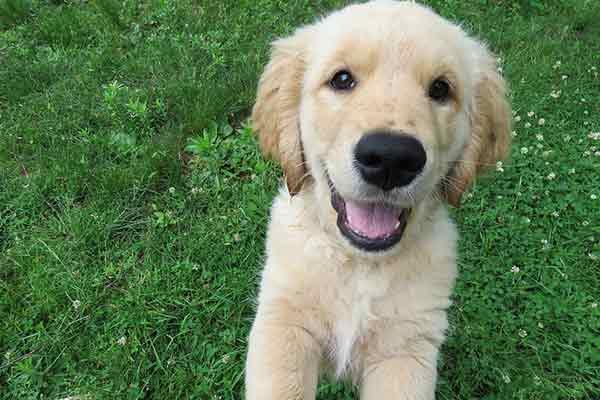 apprendre son chien ne pas sauter tout ce qu 39 il faut savoir sur chiens. Black Bedroom Furniture Sets. Home Design Ideas
