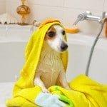 Donner un bain à son chien comment faire