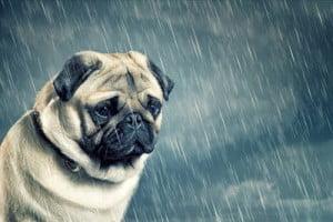 dépression-chien