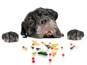 malade chien