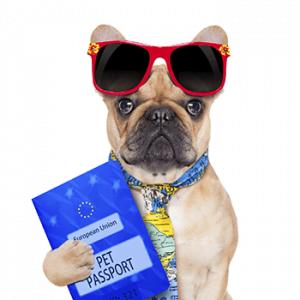 passeport-chien