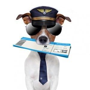 prendre avion chien