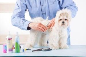 Bien choisir le salon de toilettage de son chien - Salon toilettage chien ...