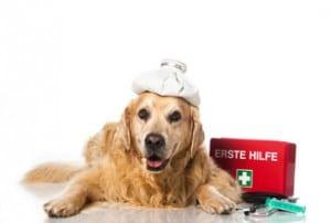 trousse-de-premiers-secours-chien