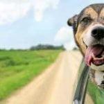 voyage-voiture-chien