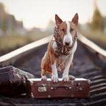 voyage train chien