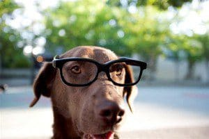 chien-informations