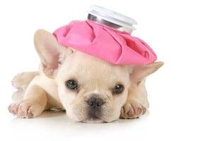 chien-malade