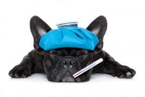chien-température