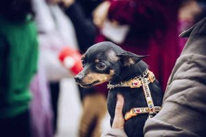 Questions avant d'adopter un chien