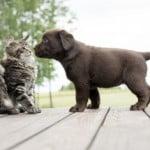 socialisation chiens