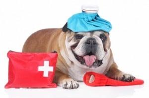 soins-urgences-chiens