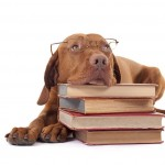 chiens classement selon intelligence