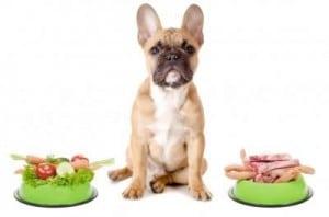 protéines chien