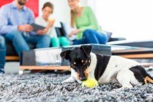 choisir un chien d 39 appartement comment faire. Black Bedroom Furniture Sets. Home Design Ideas