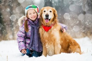 chien protection hiver