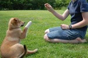 Comment éduquer un chien sourd