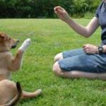 éduquer-un-chien-sourd