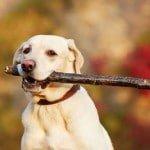 chien qui rapporte