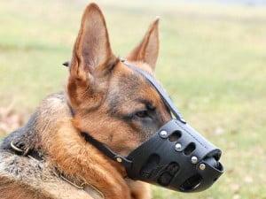 Choisir une museli re pour son chien - Cuisiner pour son chien ...