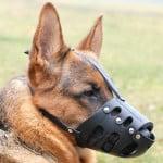 choix muselière pour chien