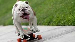 otto-bulldog-record-monde-skateboard-300x169