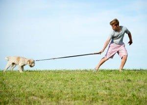 adolescence chien