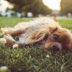 adolescence-chien