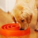 gamelle ralentir alimentation chien