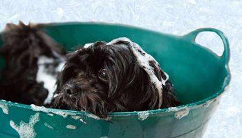 toiletter son chien soi-même