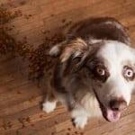 alimentation du chien et du chiot