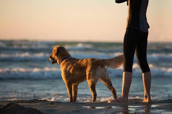 pratiquer le canicross avec son chien