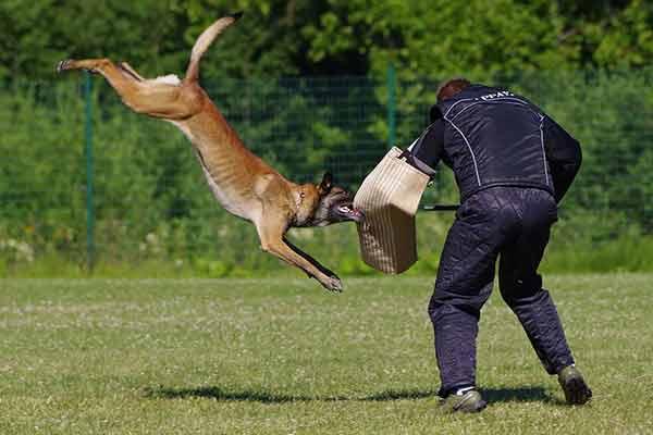 pratiquer le ring avec son chien