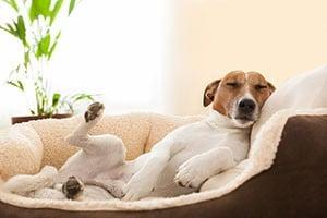 choix couchage chien