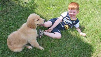 10 races de chiens adaptées aux enfants
