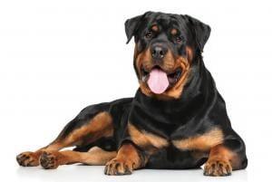 assurance responsabilite civile chien
