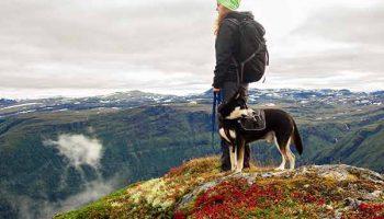 randonnée avec son chien